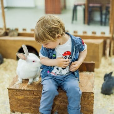 little boy with rabbit on farm