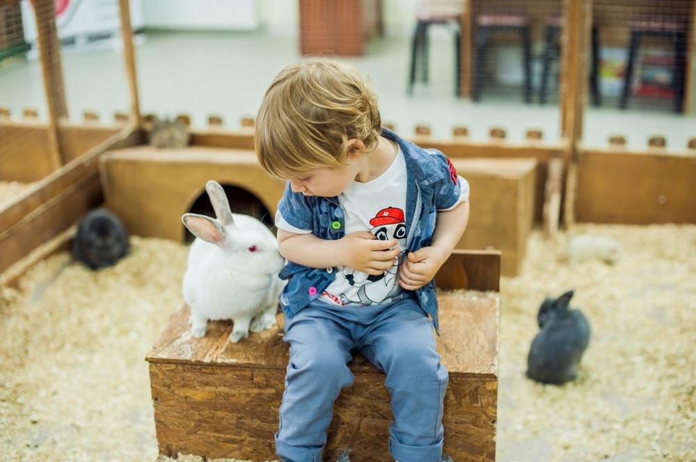 little boy with rabbit on farm