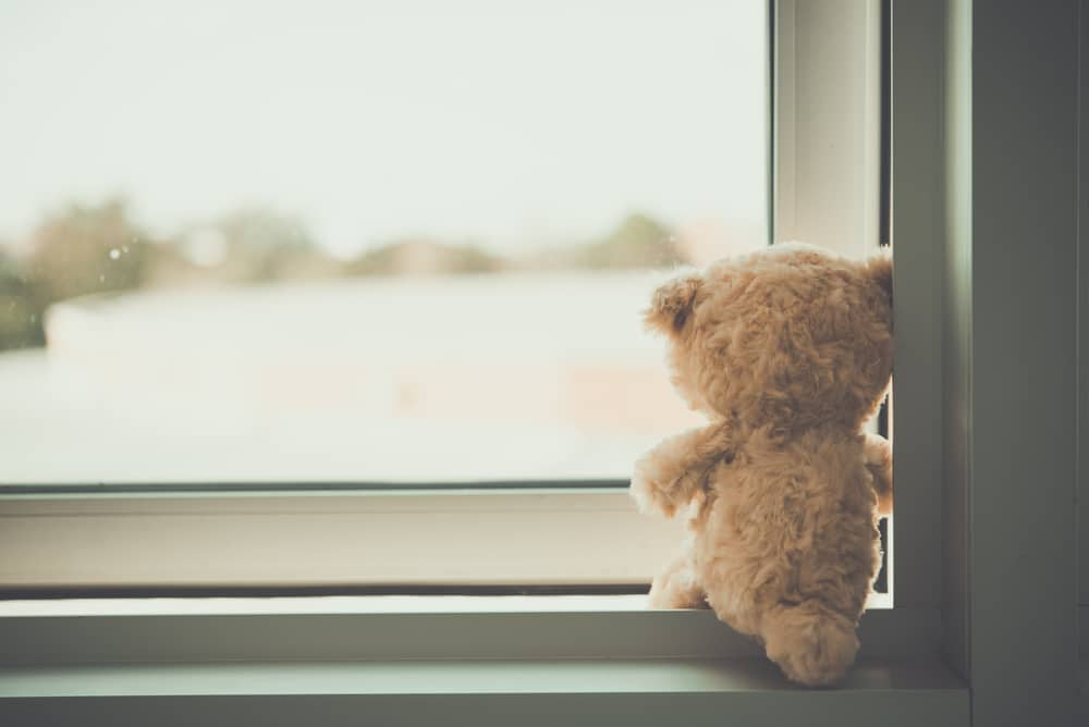 teddy bear looking outside