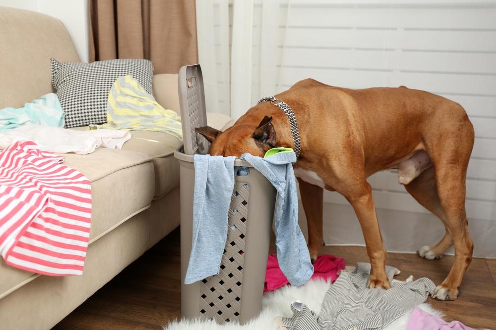animal laundry