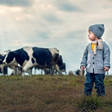 little boy in a field with cows
