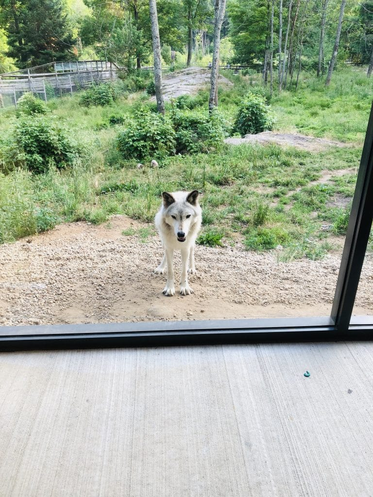 cabane des loups 4