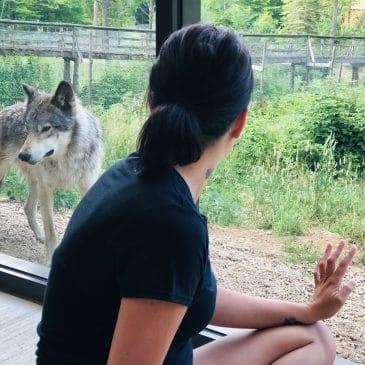 cabane des loups 3